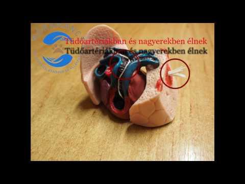 Ez a tanulmány kimutathatja a pinworm petesejtjeit