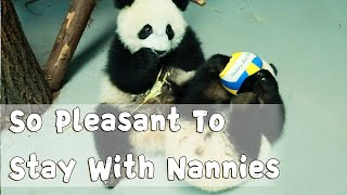 So Pleasant To Stay With Nannies | iPanda
