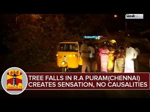 Tree-Falls-in-R-A-Puram-Chennai-Creates-Sensation-No-Causalities--Thanthi-TV