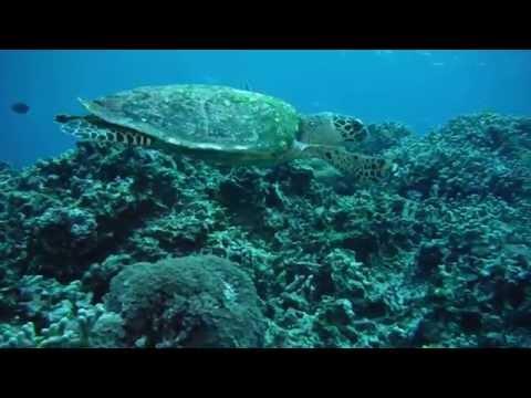 Underwater movie by FUJIFILM FinePix XP200 & XP60 (turtle, sea snake, anemone fish, coral garden)