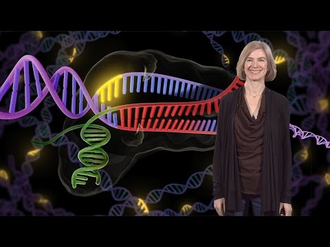Genome Engineering With CRISPR-Cas9