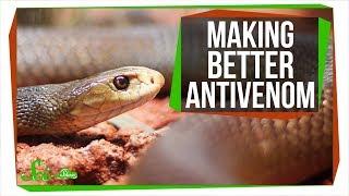 Making Antivenom out of Human Antibodies | SciShow News