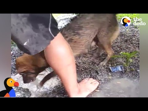 Dog Mom Rescues DROWNING Puppies From Hole | The Dodo