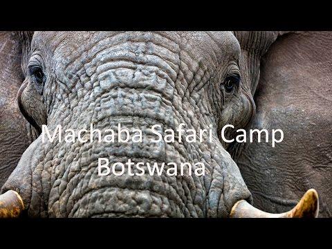 Welcome to Machaba Camp