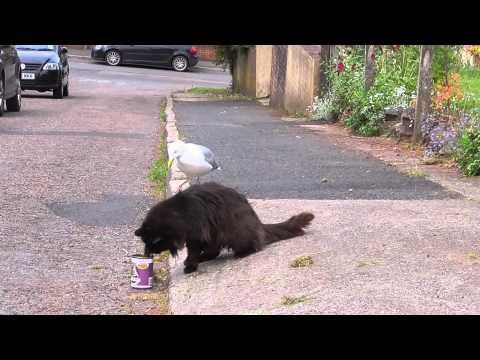 מה קורה כשהשחף השובב פוגש את חתול הרחוב?