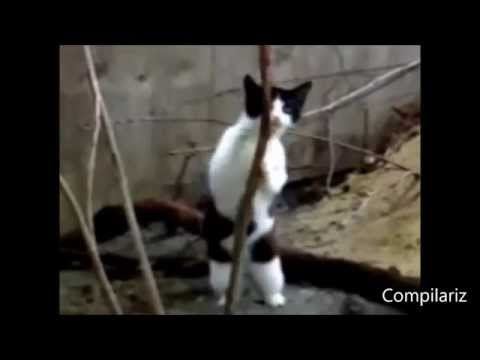lustige Katzen tanzen zur Musik Spa - Funny dance cats Compilation 2014