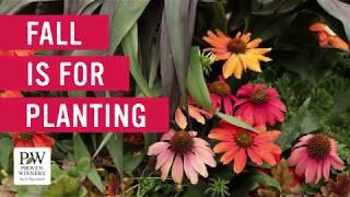 5 Plants To Add To Your Landscape This Fall