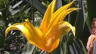 Лягушки Вальс цветов.