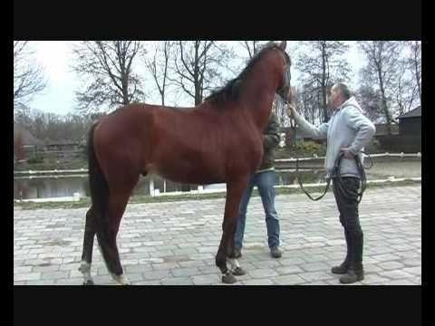 Paardenkeuring