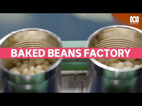 How Baked Beans are Made