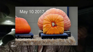 How to recognize opportunity. Diamonds and square pumpkins.  Wttd. 42