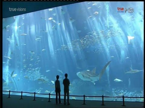 ปลาอีร์คุตสปรสิต