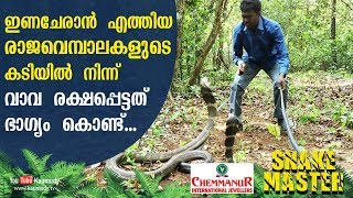 Wow! Vava was lucky enough to escape from the bite of King Cobra and its mate | Snakemaster