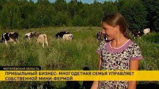 Семейная мини-ферма в Климовичском районе: секреты успеха молочного бизнеса