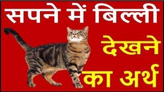 यदि सपने में बिल्ली दिखाई दें तो जाने इसका अर्थ Cat Dream Meaning, interpretation in hindi