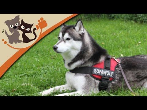 Hundezubehör- Die passende Ausrüstung für den Hund - Hundeleinen, Hundehalsbänder und Hundegeschirre