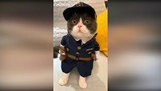 Смешные кошки и приколы с котами 2019 Лучшие приколы с животными 2019#8 Смешные видео про котов 2019