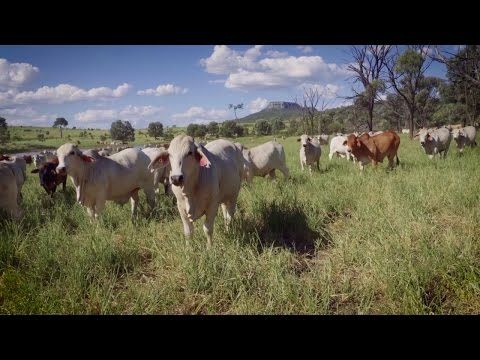 Our Team is Proud to Connect the Best Australian Beef to the World