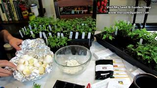 Gardening 101 Ep5: All About Seed Starting Tomatoes, Eggshell Fertilizer & Buying Transplants