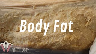 All About Fat - Why You're so Good at Gaining Weight
