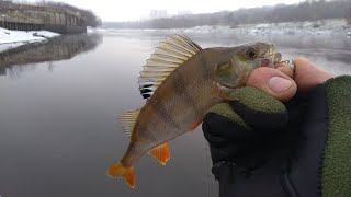 Отчет о рыбалке на москва реке за эту неделю