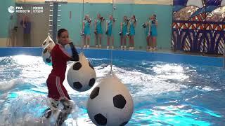 Шоу в дельфинарии Сочи за 100 дней до ЧМ-2018