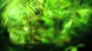 Deep Forest   Forest Hymn