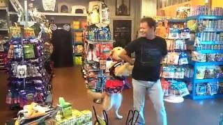 Salsa Dancing Dog