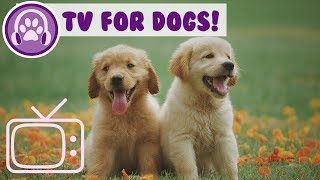 TV for Dogs! Virtual TV to Entertain Your Bored Dog + Relaxing Music!