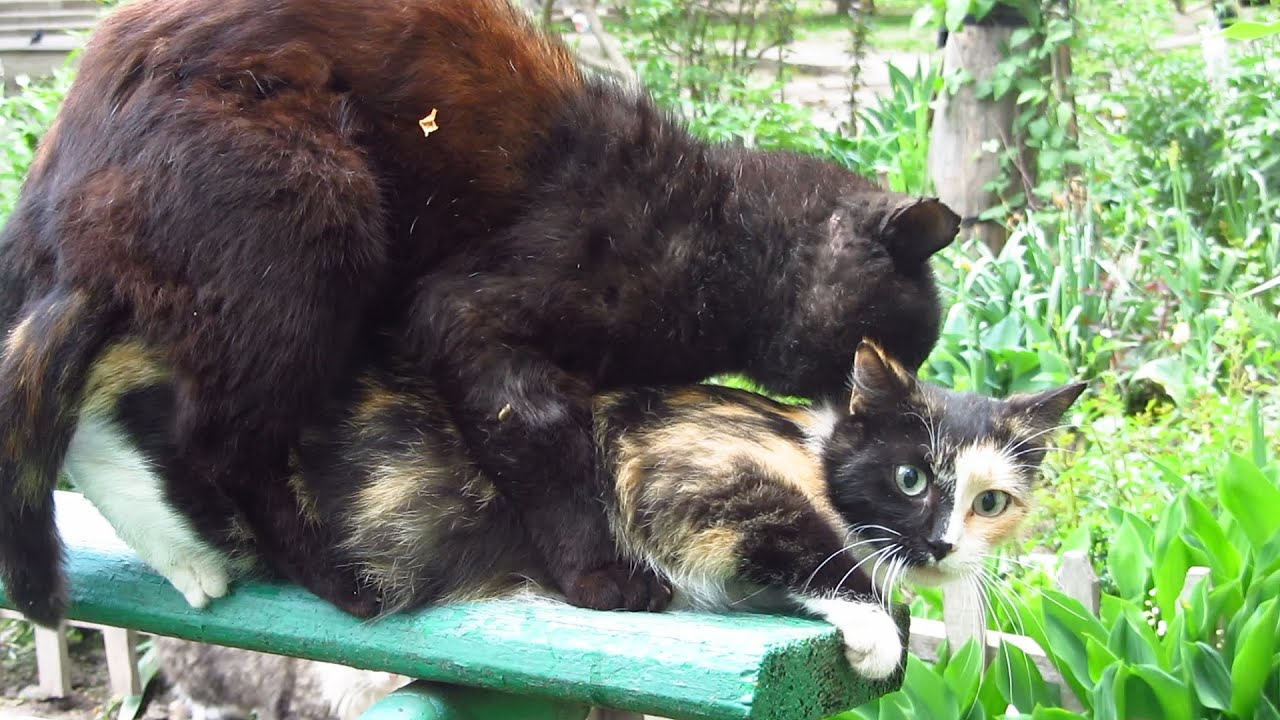 Cats mating on the bench