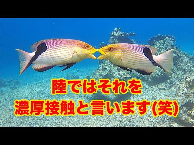 石垣島ダイビング 石垣島の海の中は緊急事態宣言とは無縁だぜー! ビーチライフ石垣島