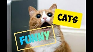 The funniest jokes with cats/ jokes with CATS 2019