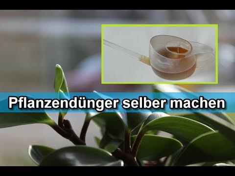 Dünger für Zimmerpflanzen & Gartenpflanzen selber machen – Pflanzendünger aus Hausmittel herstellen