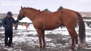 サウスヴィグラスSouthVigorous-アロースタッド種牡馬展示会2015