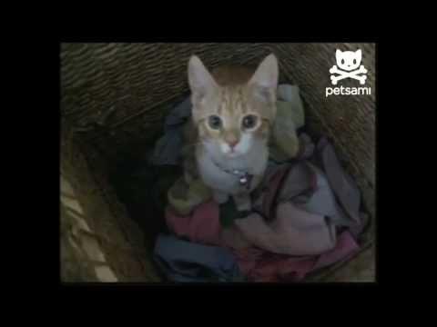 חתולה עוזרת בעבודות הבית - חמוד!