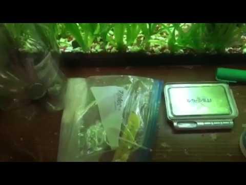 Pinag-aaralan sa mga worm palabas na