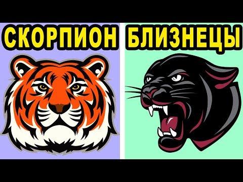 Какая Ты Кошка по Знаку Зодиака? Кто ты по Гороскопу из Семейства Кошачьих?