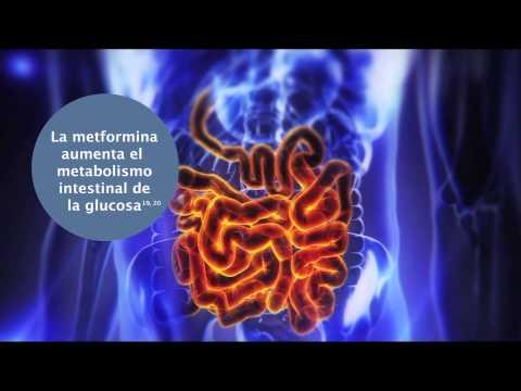 Dzhilian maykls el programa quema la grasa acelera el metabolismo