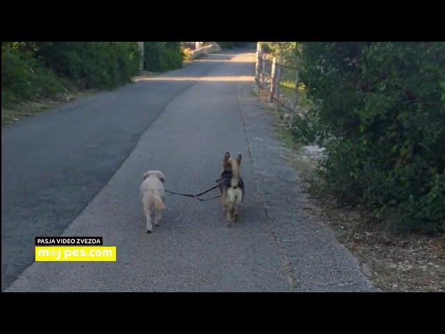 Neli – Video natečaj 2020 – Revija Moj Pes #Neli #MojPes