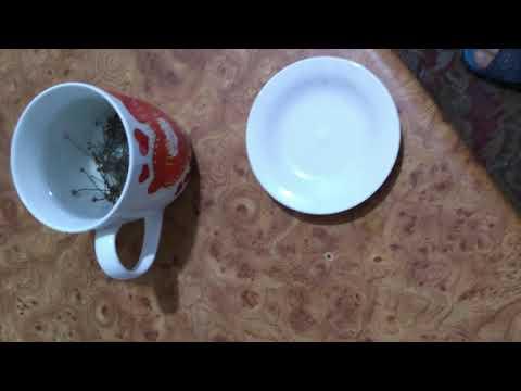 Ceaiuri pentru detoxifiere organismului