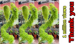 Plants Hanging Ideas With Coconut Shells/spiral Hanging Garden/Amazing Vertical Hanging Garden Ideas