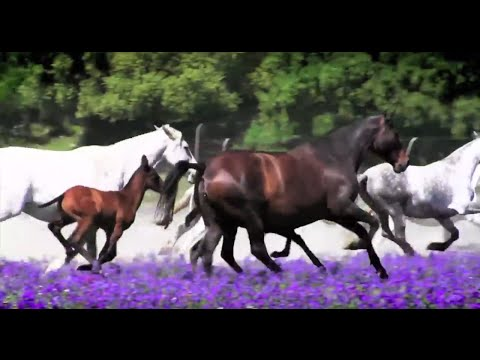 """ANCCE 