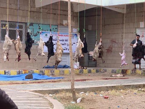 Hediye Kurbanlar Yemen'de Muhtaçlara Dağıtıldı