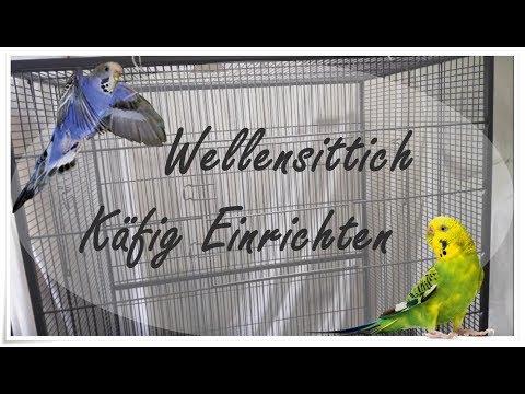 Wellensittich Käfig Einrichten   FranzisPflegeKiste