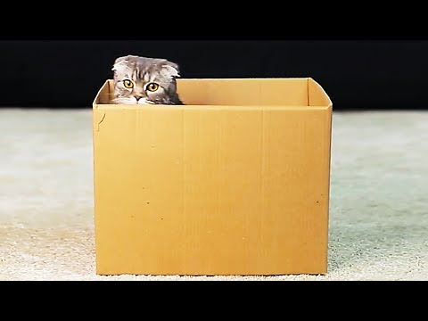 10 CUTE PET HACKS