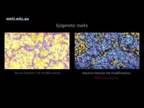 אפיגנטיקה והשתקת כרומוזום X