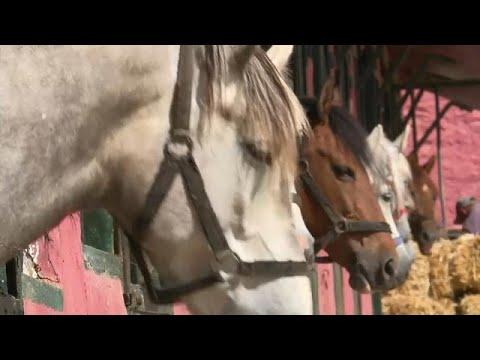 العرب اليوم - تربية الخيول تحتضر في الجزائر  وتحتاج إلى معجزة كي تعود