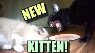 Talking Kitty Cat - Meet The New Kitten! - Video Youtube
