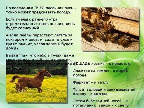 ПЧЁЛЫ (Народные приметы про пчел №2)
