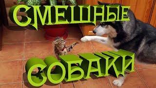 Смешные собаки. Приколы с собаками. Смотреть CUBE.